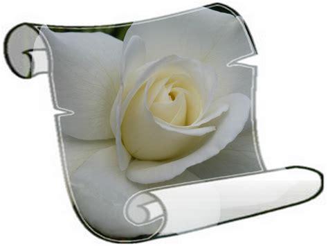 Plan 5 by Rose Blanche Photo De Fleurs Papillons Le Blog De