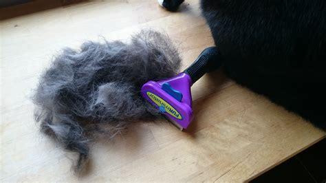 ab wann haben katzen fieber erbrechen bei katzen ab wann sollte zum tierarzt