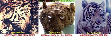 Pola Kulit Macan Harimau javan tiger center s just another weblog