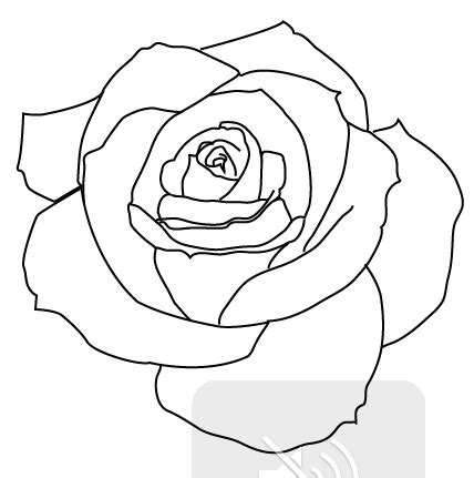 simple rose tattoo drawing realistic rose tattoo outline pictures tattoos
