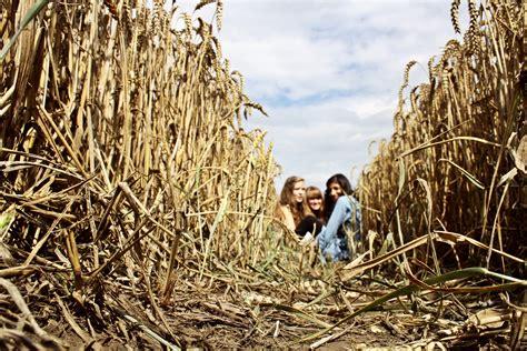 bett im kornfeld kein bett im kornfeld foto bild jugend outdoor