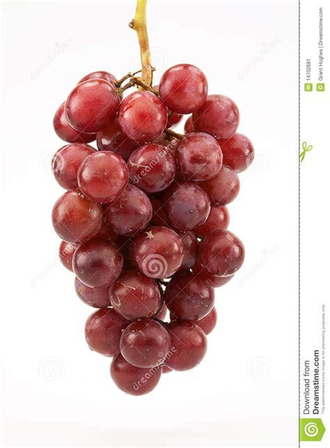 imagenes de uvas sin fondo red seedless grapes on vine stock image image of vitis