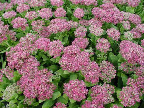 garten pflanzen herbst deko ideen garten mit herbstblumen f 252 r eine gute stimmung
