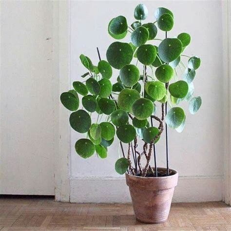 money plant in bedroom 25 best ideas about money plant on pinterest planters