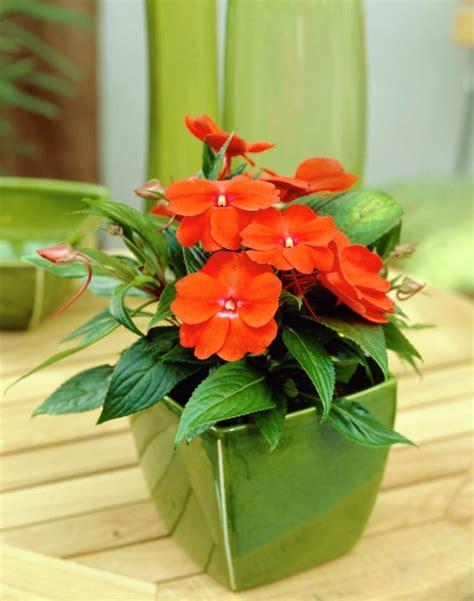 plantas de jardin con flor