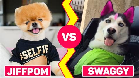 what type of is jiffpom epic battle musers dogs jiffpom vs swaggy wolfdog musical ly compilation 2017