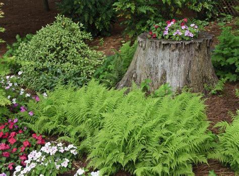 Farn Im Garten by Farne Im Garten Tipps Gartenpflanzen Garten