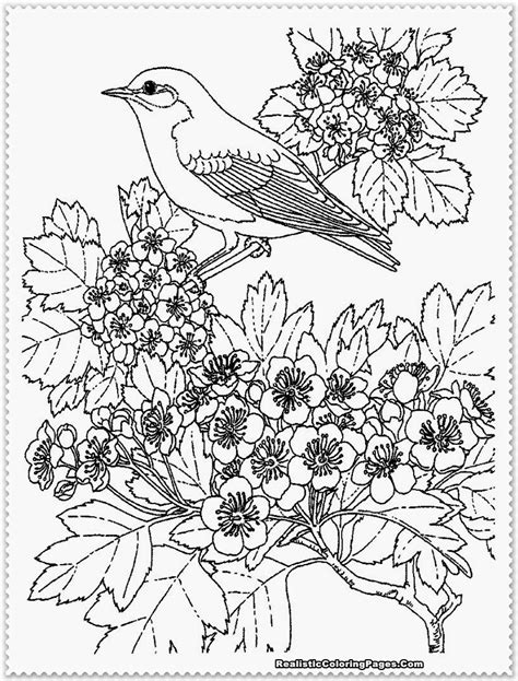 coloring book pages bird free realistic birds coloring pages