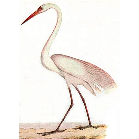 heron meaning quot a white heron quot analysis quot a white heron quot symbolism quot a white heron quot summary quot a white heron