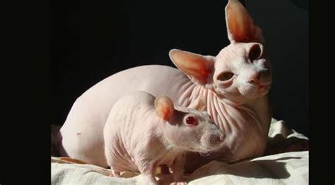 Mainan Tikus Bulu Mainan Kucing Anjing 4 persahabatan unik yang tak pernah kamu bayangkan citizen6 liputan6