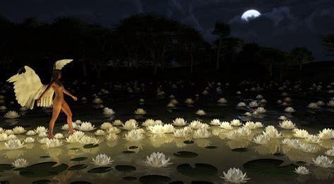 light on the path walking on the light path of lotus by lg nimbus on