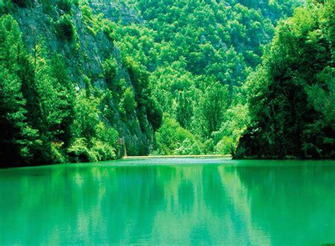 fiori di colore verde monicolour calma con i colori