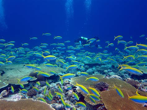 imagenes medicas arrecifes los arrecifes de coral m 225 s degradados tardar 237 an 60 a 241 os en