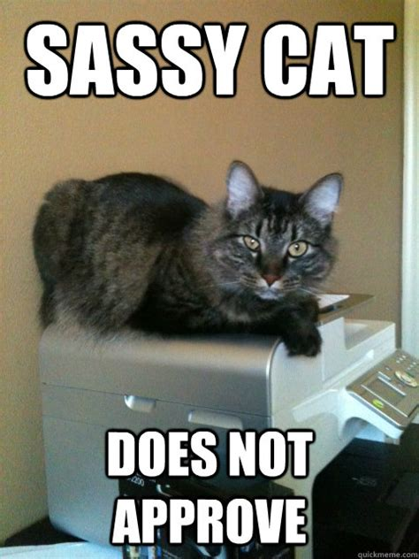sassy cat memes image memes at relatably com