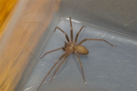 Spider Bite Detox by 131 Best Images About Poisonous On The Giants
