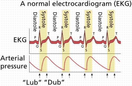 a normal ekg & heart sounds | paramedic study guide