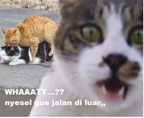 Meme Kucing - 25 meme kucing yang imut ngegemesin dan bikin ketawa