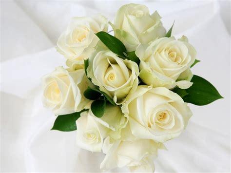 wallpaper bunga mawar yang indah kumpulan 5 foto atau gambar bunga mawar yang indah dan