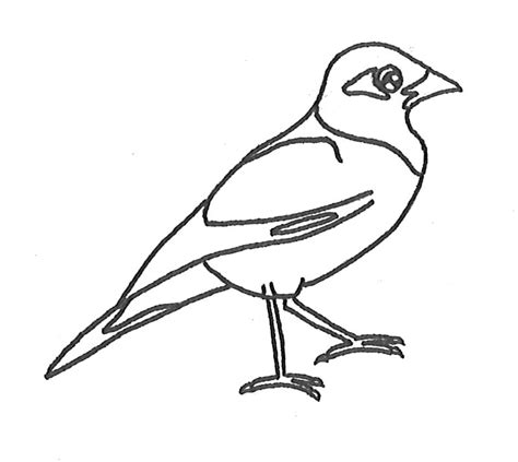 mynah bird coloring page colouring in pictures discover and learn manaaki