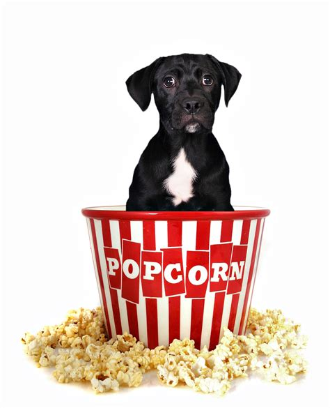 dogs eat popcorn food nutrition archives page 2 of 3 practical paw the toolkit
