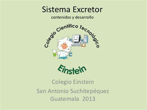 sistema excretor slideshare sistema excretor