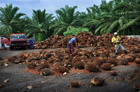 Minyak Kelapa Sawit Per Ton perkembangan rspo dalam pelestarian minyak sawit