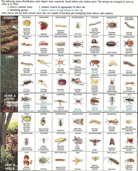 a guide to identifying your home d cor style http www planocommunitygarden org garden101 insect