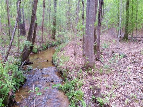 Coosa County Detox by Wooded Land With Land For Sale Goodwater