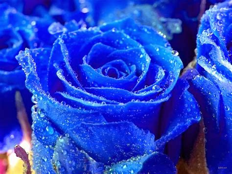 wallpaper of blue flowers flower wallpapers flower pictures red rose flowers
