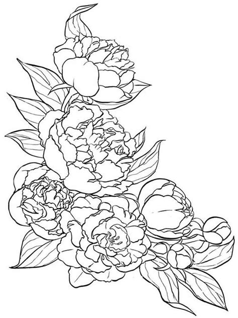Vase With Flowers Coloring Page Peony Flower Coloring Pages Download And Print Peony