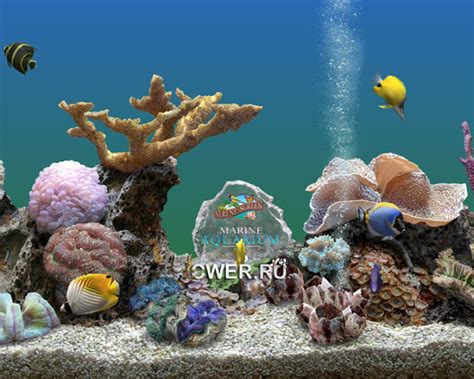 serenescreen marine aquarium download download serenescreen marine aquarium auto design tech