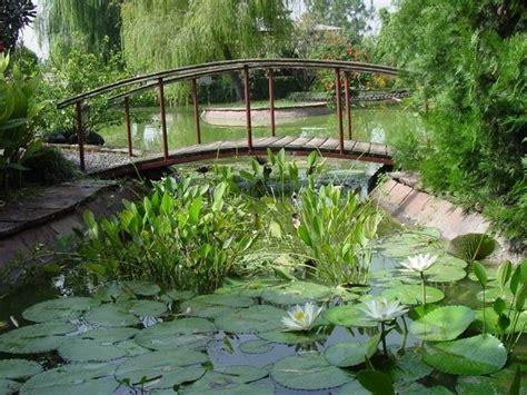 giardino d acqua giardini d acqua progettazione giardino