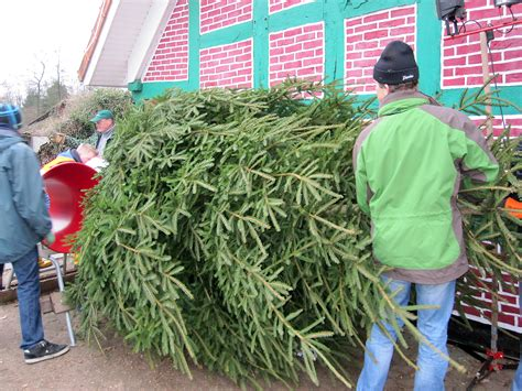 weihnachtsbaum bremen weihnachtsb 228 ume willkommen auf dem orthhof dehlwes in