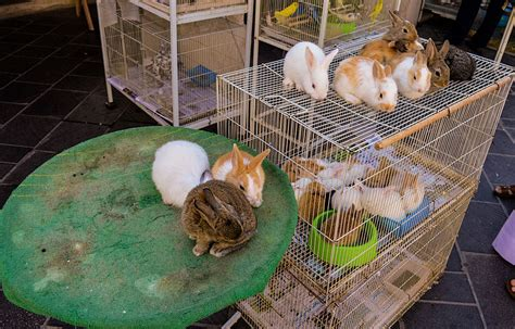 pet dogs for sale file rabbits for sale hopefully as pets in souq waqif 12543432834 jpg wikimedia
