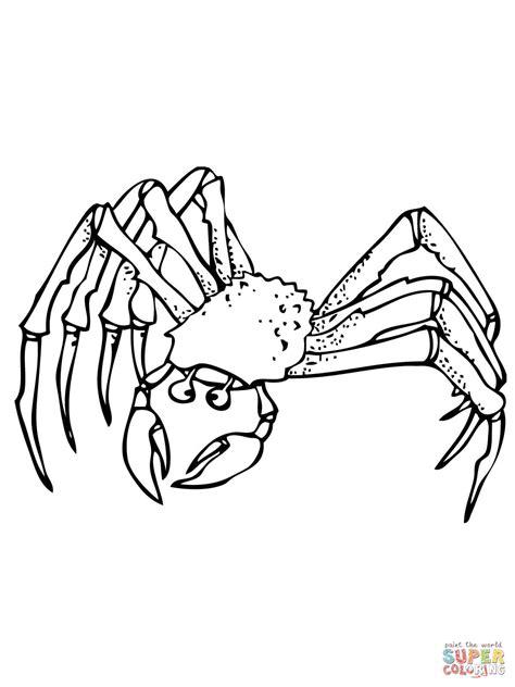 ghost crab coloring page dibujo de cangrejo fantasma para colorear dibujos para