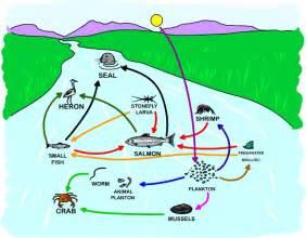 estuary food web estuaries gardner apes pinterest