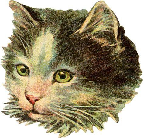 vintage illustration vintage cat illustration the graphics fairy