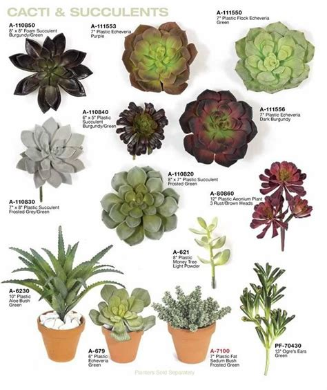 1 fake indoor succulent plants plantae pinterest