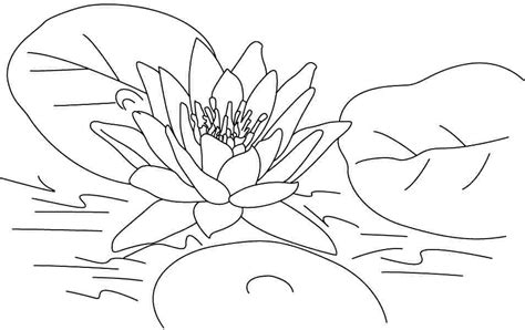 printable pictures of lotus flowers printable coloring pages lotus flowers coloring home