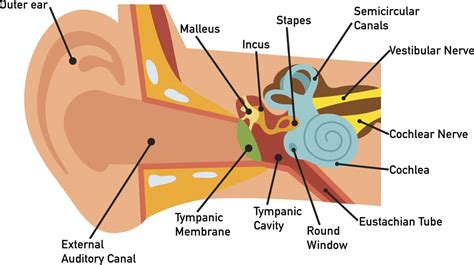 ladder diagram exles wiring diagrams wiring diagram