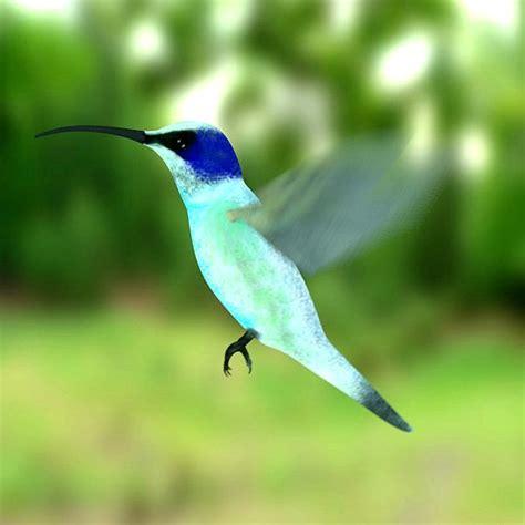 colibri bird 3d model