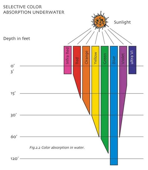 Absorption Of Light by Sciencetweets Portal Light Absorption