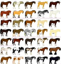 color of horses 1000 images about horses on