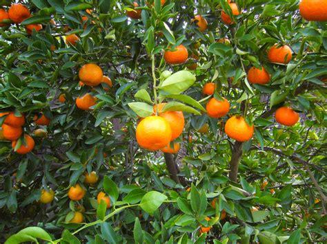 Sacramento Vegetable Gardening Networkedblogs By Ninua Sacramento Vegetable Gardening