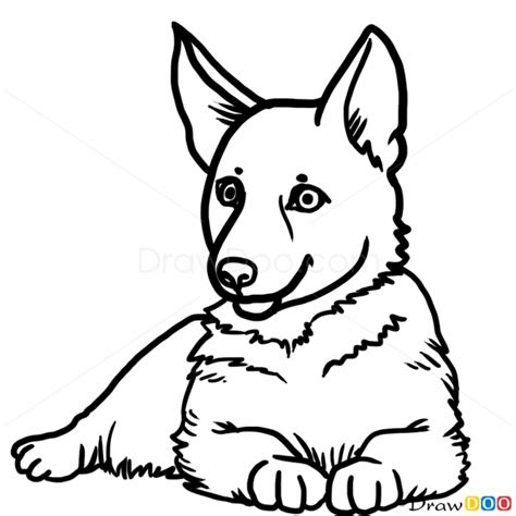 how to a german shepherd puppy how to draw puppy german shepherd dogs and puppies acrylics german