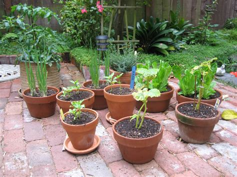 Container Garden First Harvest Challenges I Love You Potted Vegetable Garden