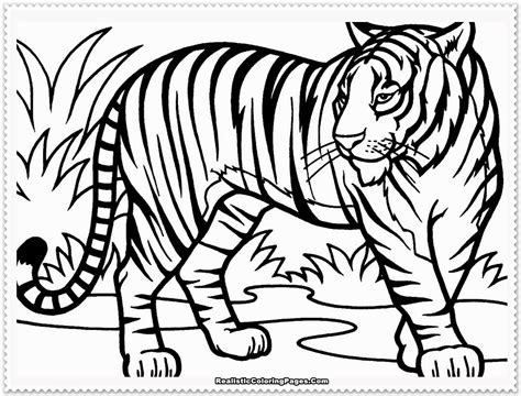 coloring pages siberian tiger inspiring coloring pages of tigers awesome des 6907