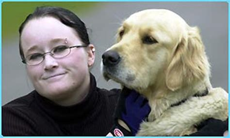 golden retriever saves owner cbbc newsround animals orca the golden retriever saves owner s