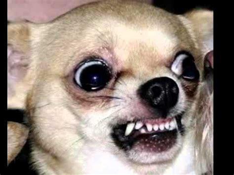 bark sounds barking at funnydog tv