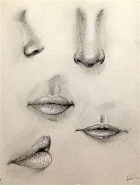 Drawing Noses by Best 25 Nose Drawing Ideas That You Will Like On